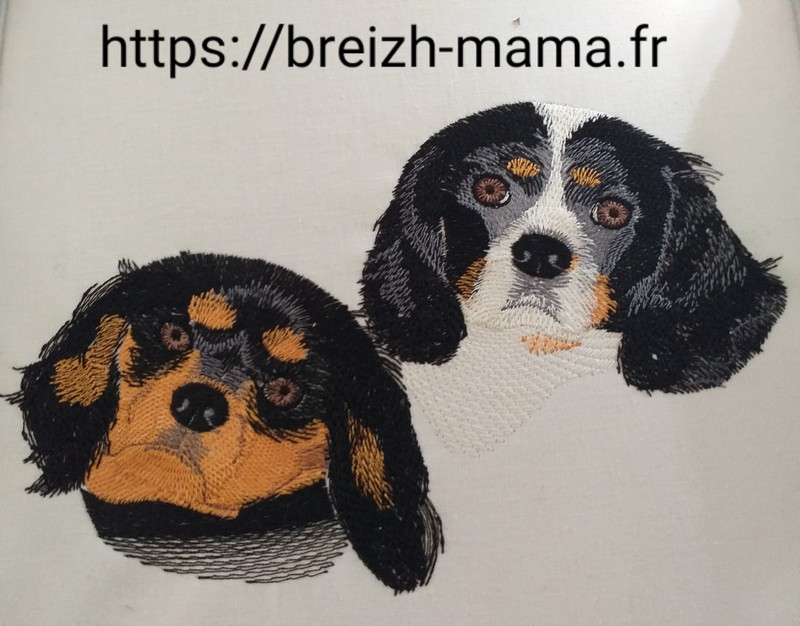Broderie -Cavalier king charles